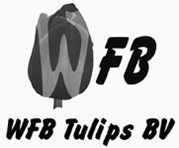 FB-Wit-Flower-Bulbs